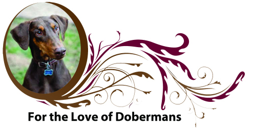 For the Love of Dobermans